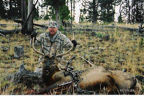 2004 Elk David Hays with nice Bull Elk